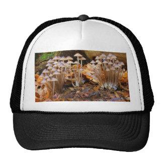 Mycena Inclinata Clustered Bonnet Mushroom Fungi Trucker Hat