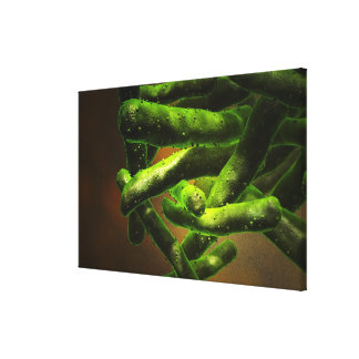 Mycobacterium Tuberculosis Canvas Print