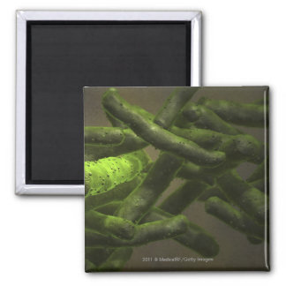 Mycobacterium tuberculosis cells refrigerator magnets
