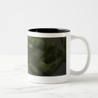 Mycobacterium tuberculosis cells Two-Tone coffee mug