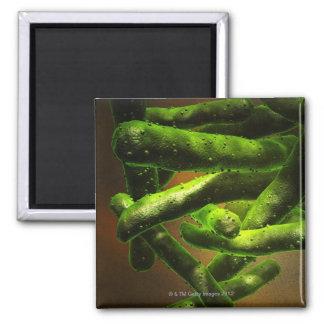 Mycobacterium Tuberculosis Refrigerator Magnets
