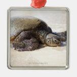 Mydas del Chelonia de la tortuga de mar verde) en Adorno Navideño Cuadrado De Metal