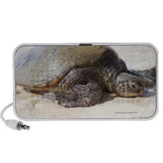 Mydas del Chelonia de la tortuga de mar verde) en  Mp3 Altavoz