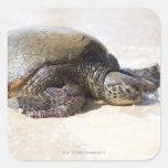 Mydas del Chelonia de la tortuga de mar verde) en Pegatina Cuadrada