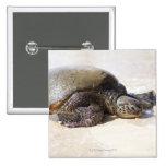 Mydas del Chelonia de la tortuga de mar verde) en  Pin Cuadrado