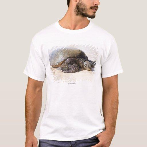 Mydas del Chelonia de la tortuga de mar verde) en Playera