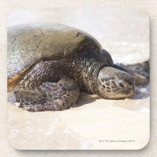 Mydas del Chelonia de la tortuga de mar verde) en  Posavaso
