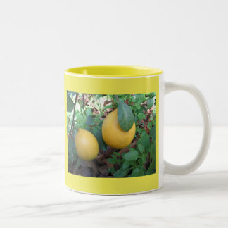 Myers Lemons Two-Tone Coffee Mug