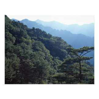 Myohyang Mountains from the Forest Flyer
