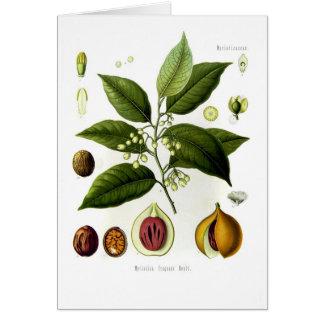 Myristica fragrans (nutmeg) greeting cards