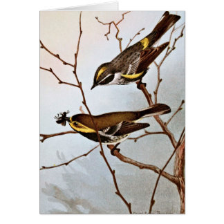 Myrtle and Blackthroated Warblers Greeting Card