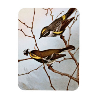 Myrtle and Blackthroated Warblers Flexible Magnet