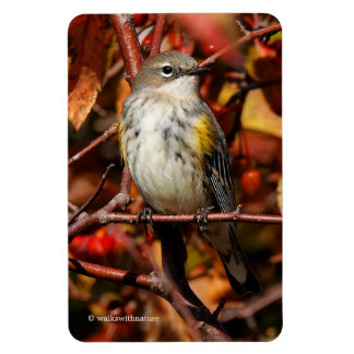 Myrtle Yellow-Rumped Warbler in the Tree Magnet
