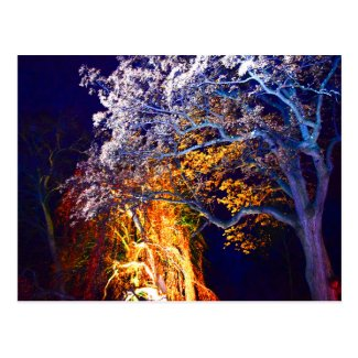 Mysterious Lighting Trees Postcard