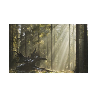 Mystic forest gallery wrap canvas