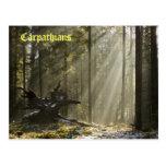 Mystic forest postcard