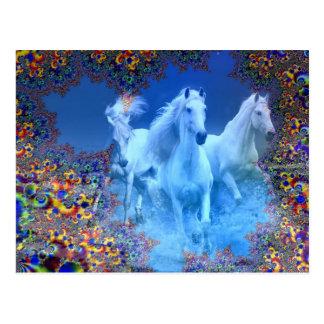 Mystic Horses Postcard
