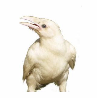 Mystic White Raven Wildlife Sculpted Gift Item Statuette