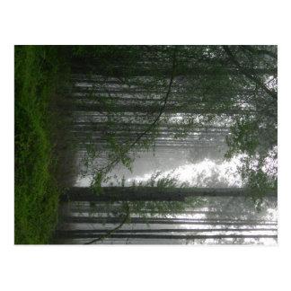 Mystic Woods Postcard
