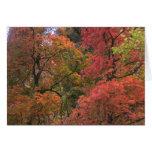 Mystical Autumn (3) Greeting Cards