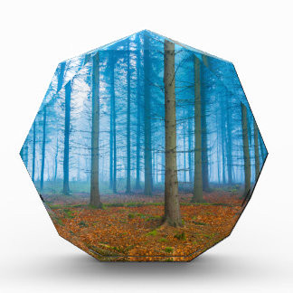 Mystical Forest at the fog in blue and orange Award
