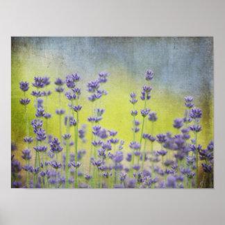 Mystical Lavender Posters