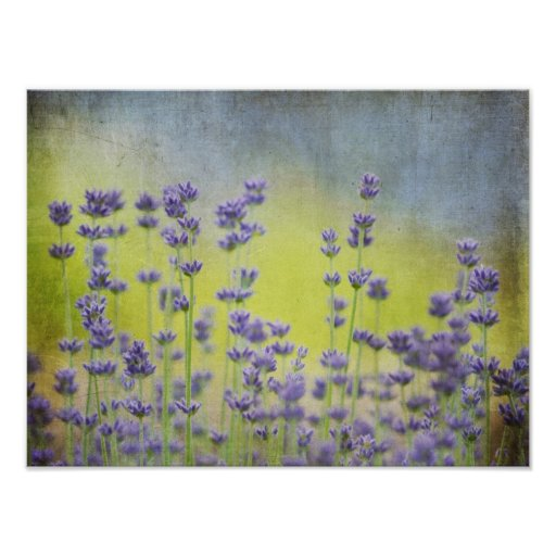 Mystical Lavender Posters