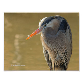 Mystique of the Great Blue Heron Photo Print