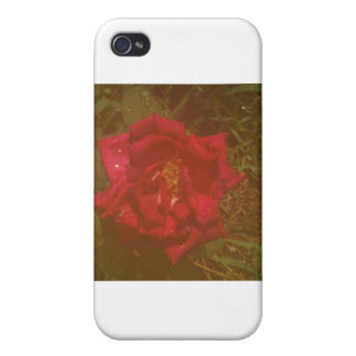 mysty rose iPhone 4 covers