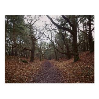 N (3).jpg postcard