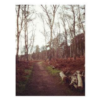 N (5).jpg postcard