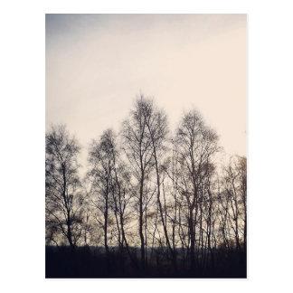 N (6).jpg postcard