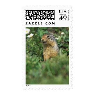 N.A., Canada, Alberta, Banff NP, Columbian Postage Stamp