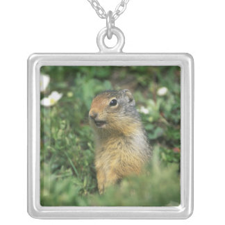 N.A., Canada, Alberta, Banff NP, Columbian Silver Plated Necklace