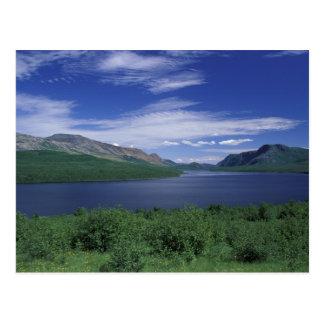 N.A., Canada, Newfoundland, Grose Morne Trout Postcard