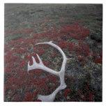 N.A., los E.E.U.U., Alaska, asta del caribú de A.N Azulejo Cuadrado Grande