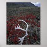 N.A., los E.E.U.U., Alaska, asta del caribú de A.N Poster