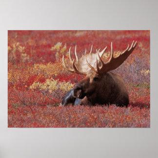 N.A., los E.E.U.U., Alaska, parque nacional de Den Posters
