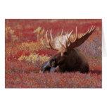 N.A., los E.E.U.U., Alaska, parque nacional de Den Tarjeta De Felicitación