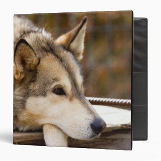 "N.A., los E.E.U.U., Alaska. Perros de trineo Carpeta 1 1/2"""