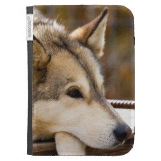 N A los E E U U Alaska Perros de trineo forni