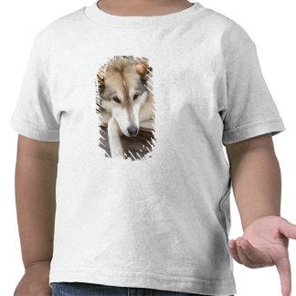 N.A., los E.E.U.U., Alaska. Perros de trineo Camisetas