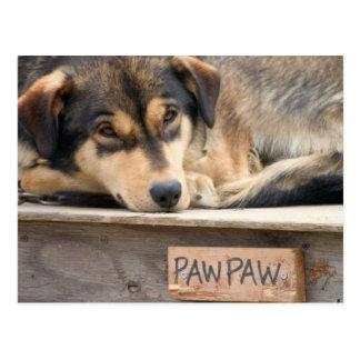 N.A., los E.E.U.U., Alaska. Perros de trineo Postal