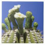 N.A., los E.E.U.U., Arizona, Tucson, desierto 2 de Tejas