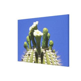N.A., los E.E.U.U., Arizona, Tucson, desierto 2 de Lona Estirada Galerias
