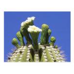 N.A., los E.E.U.U., Arizona, Tucson, desierto 2 de Tarjetas Postales