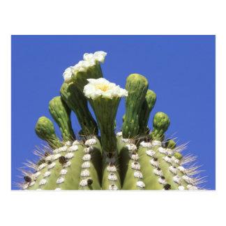 N A los E E U U Arizona Tucson desierto 2 de Tarjetas Postales