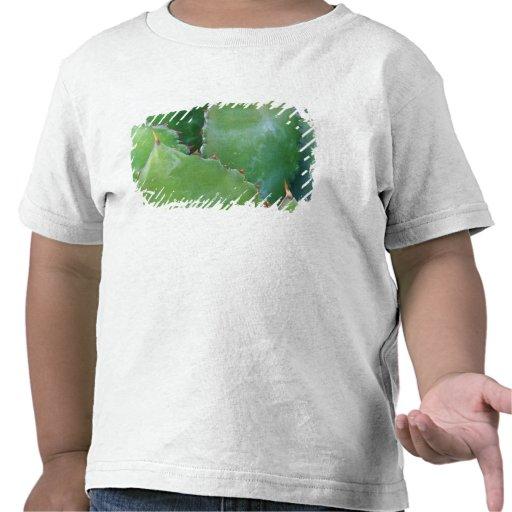 N.A., los E.E.U.U., Arizona, Tucson, desierto del Camisetas