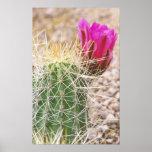N.A., los E.E.U.U., AZ, Phoenix, abandonan botánic Posters