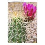 N.A., los E.E.U.U., AZ, Phoenix, abandonan botánic Felicitación